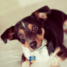 Ollie :: Carol Bilich's canine greeter